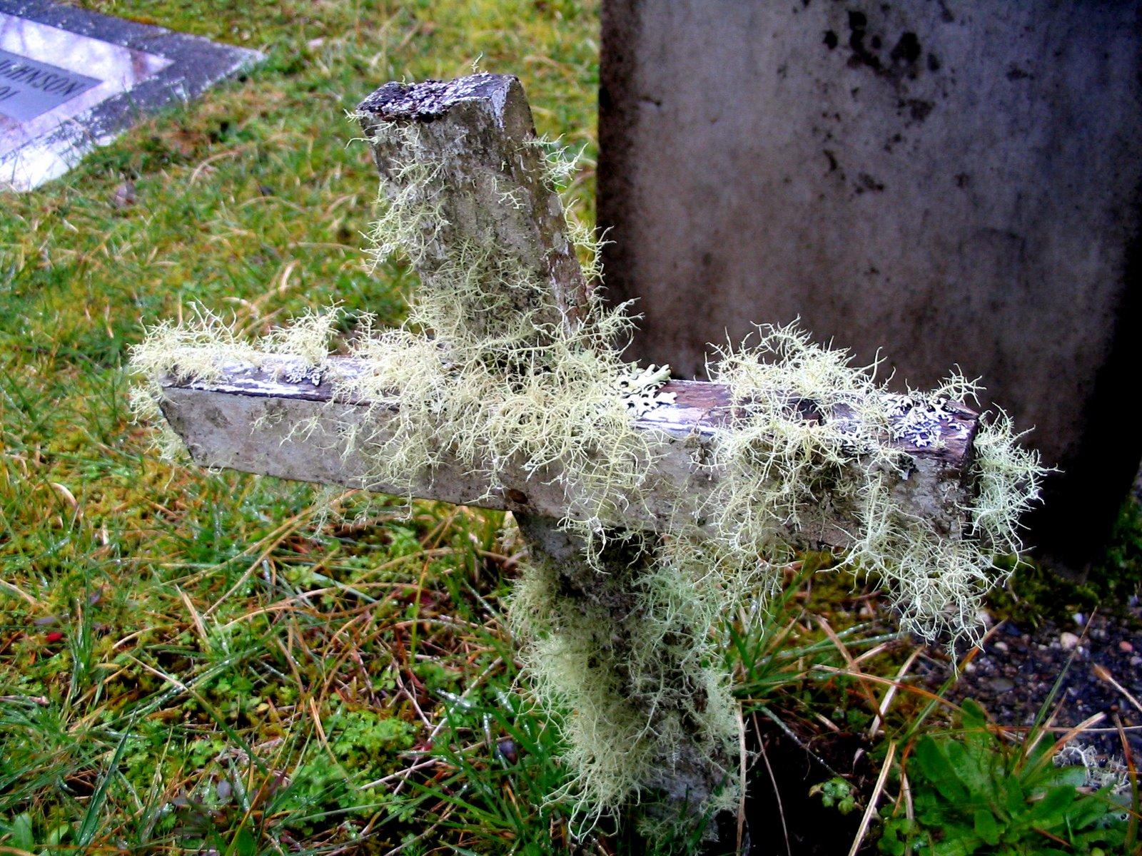 [moss+cross+(oysterville)]