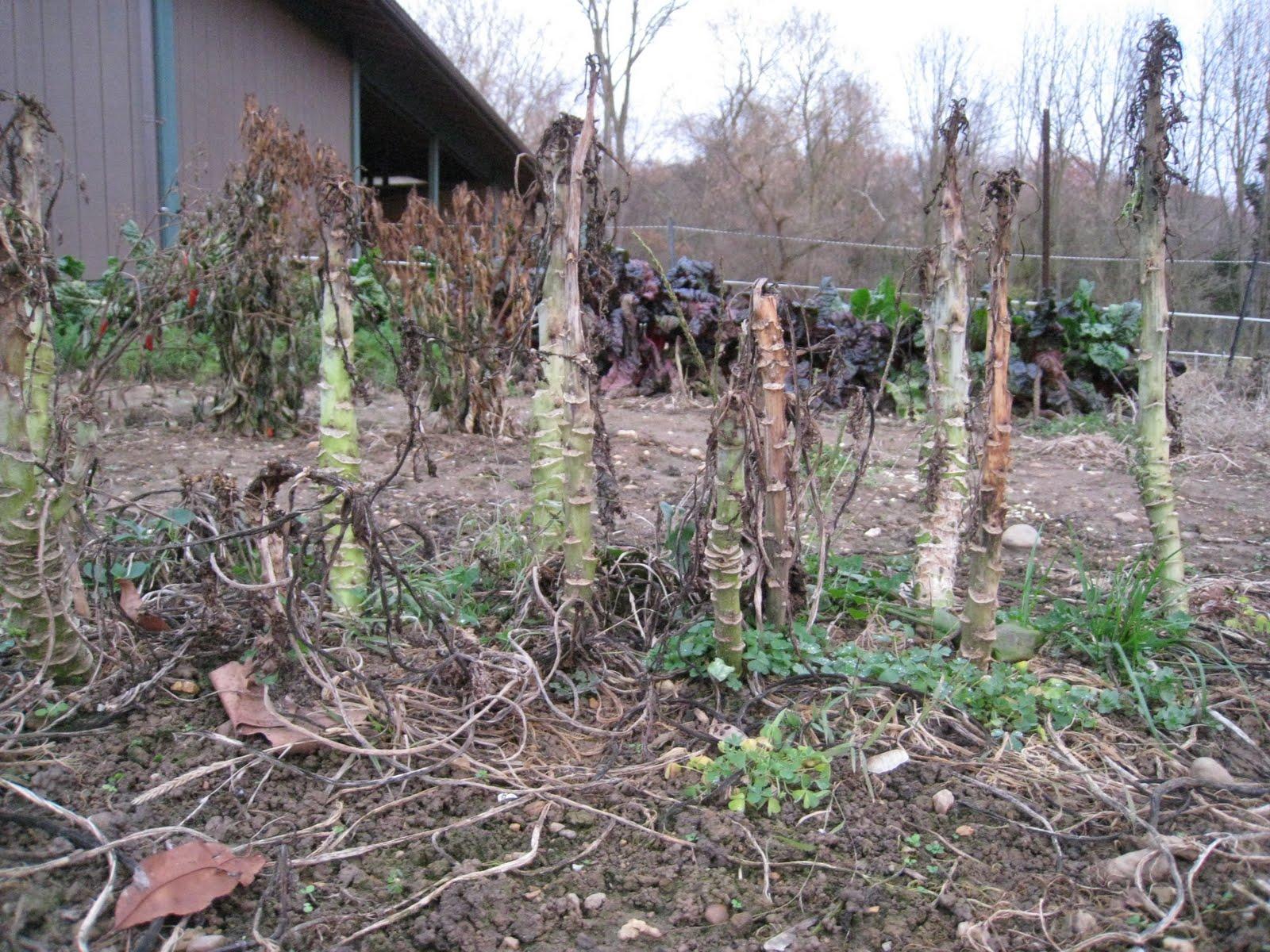 Grow It Eat It: 2009