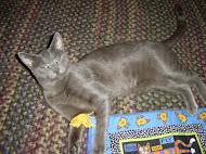 Rupert, b'day 4/20/2005