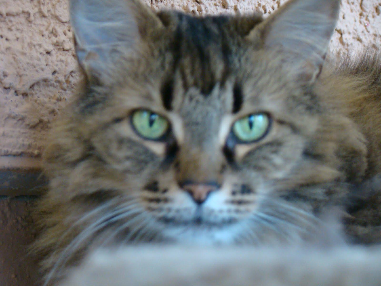 lentigo simplex kat