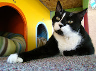 Sylvester, b'day 4/4/2003