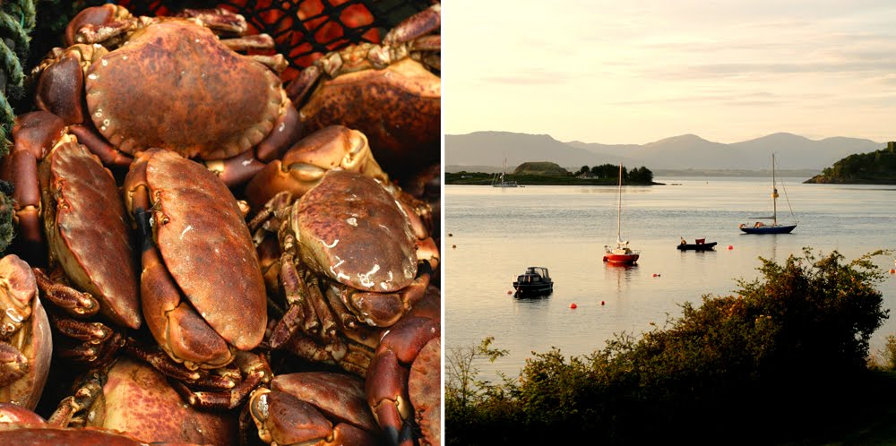 [crabs+boats]