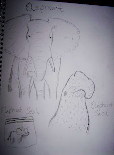Elephant sketches