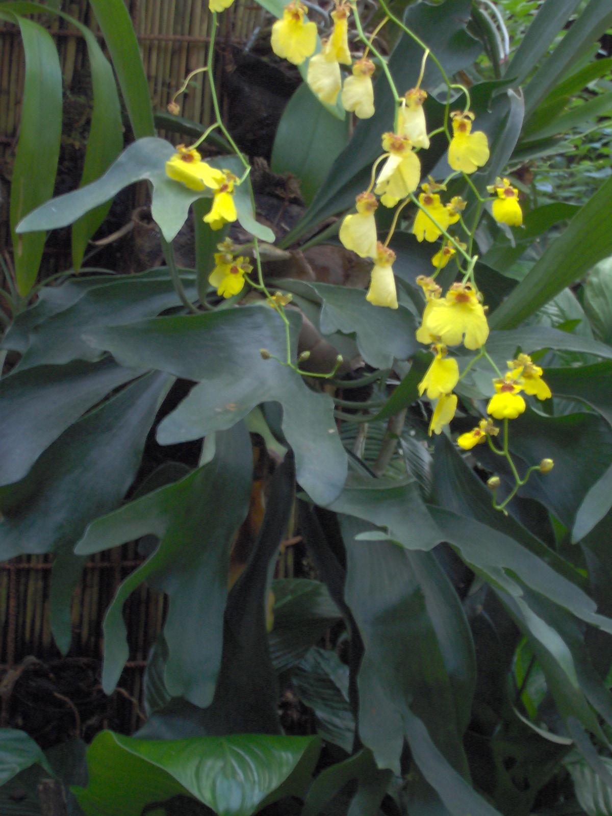 loveflowers manutenzione e progettazione giardini padova