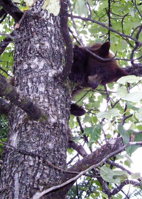 [cub+in+tree+3]