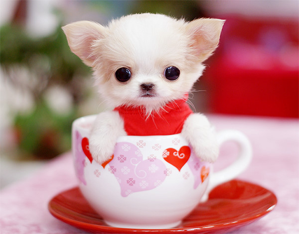 Amisbide Very Cute Puppies Pictures