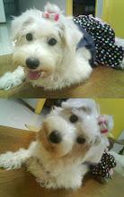 my baby dog^^