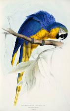 edward lear y un papagayo