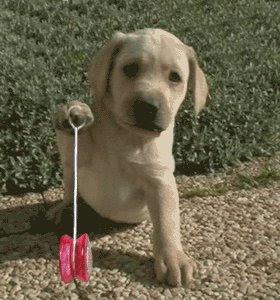 Cachorro, é recordista mundial de ioio...Jogou por mais de 5 horas seguidas, e fez manobras impressionantes. CONFIRA!
