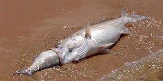 Pois é...O peixe morre pela boca! LITERALMENTE!