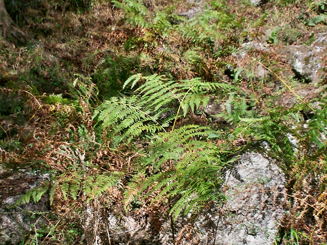 A Flora dos Rios