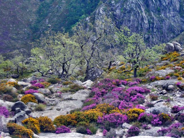 Paisagens de Portugal - O Gerês em Flor