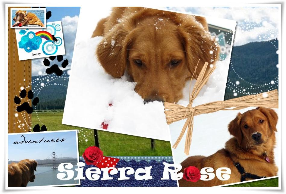 Sierra Rose