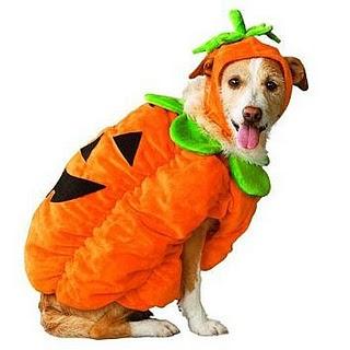 roupas para cachorros dicas