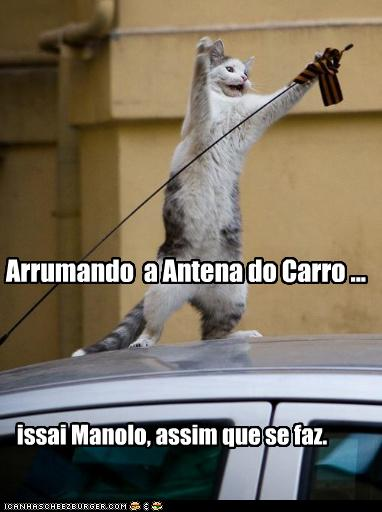 Gato e a Antena do carro