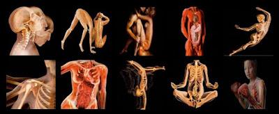 Imágenes del cuerpo humano transparente I