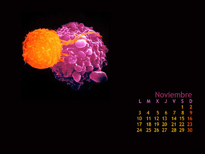 Wallpaper Calendario Noviembre 2008