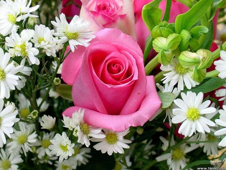 As mais belas flores para todos meus visitantes, o meu carinho, meu abraço e beijosss