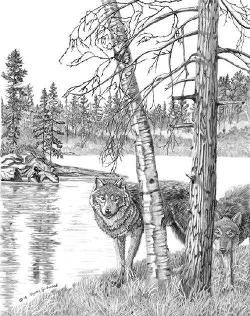 Hidden Wolf Pictures