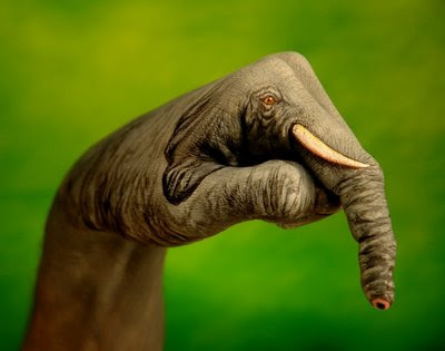 Elephant Illusions | Hand Painted Illusion