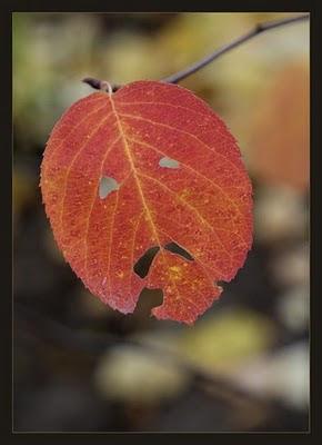 Face in Leaf Illusion