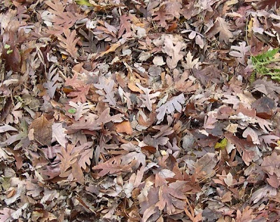 Vincent Price in a Pile of Leaves