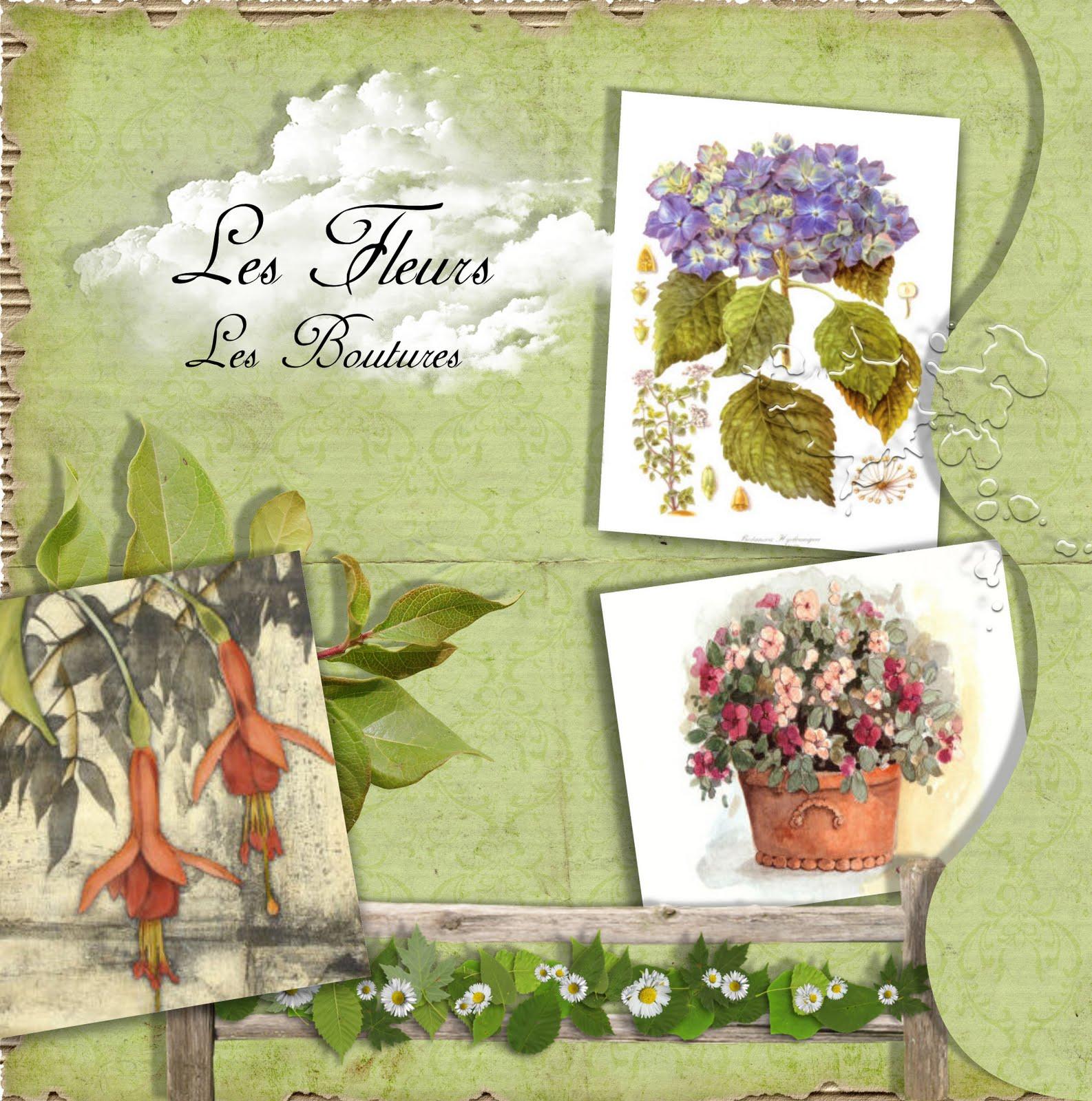 Jardin parfum plaisir du jardin juillet 2010 for Jardin 5 juillet biskra