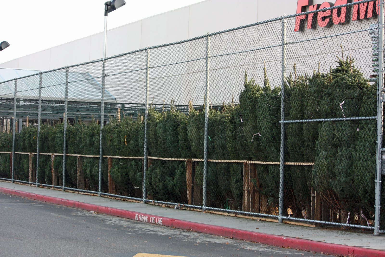 trees stacked deep and ready for holiday shoppers this weekend at fred meyer when do you put your christmas tree up we usually do ours thanksgiving - Fred Meyer Christmas Trees