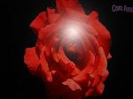 Rosa vermelha reluzente