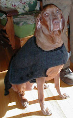 Boomer in his felted wool coat