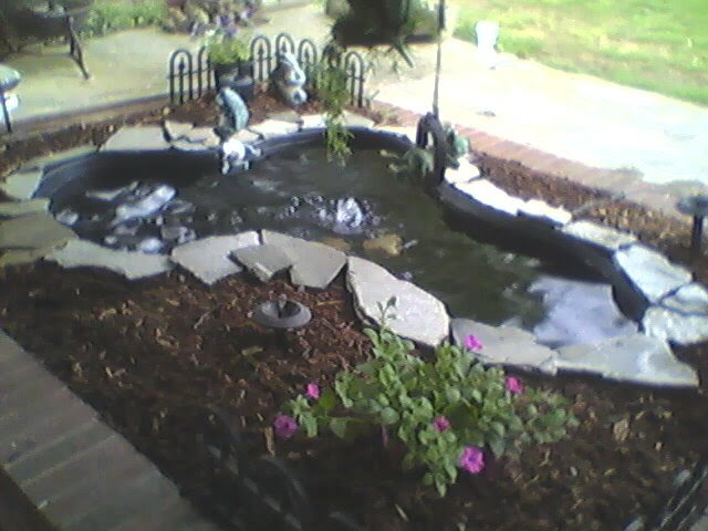 Clara 39 s corner a clean fish pond for Pond cleaning fish