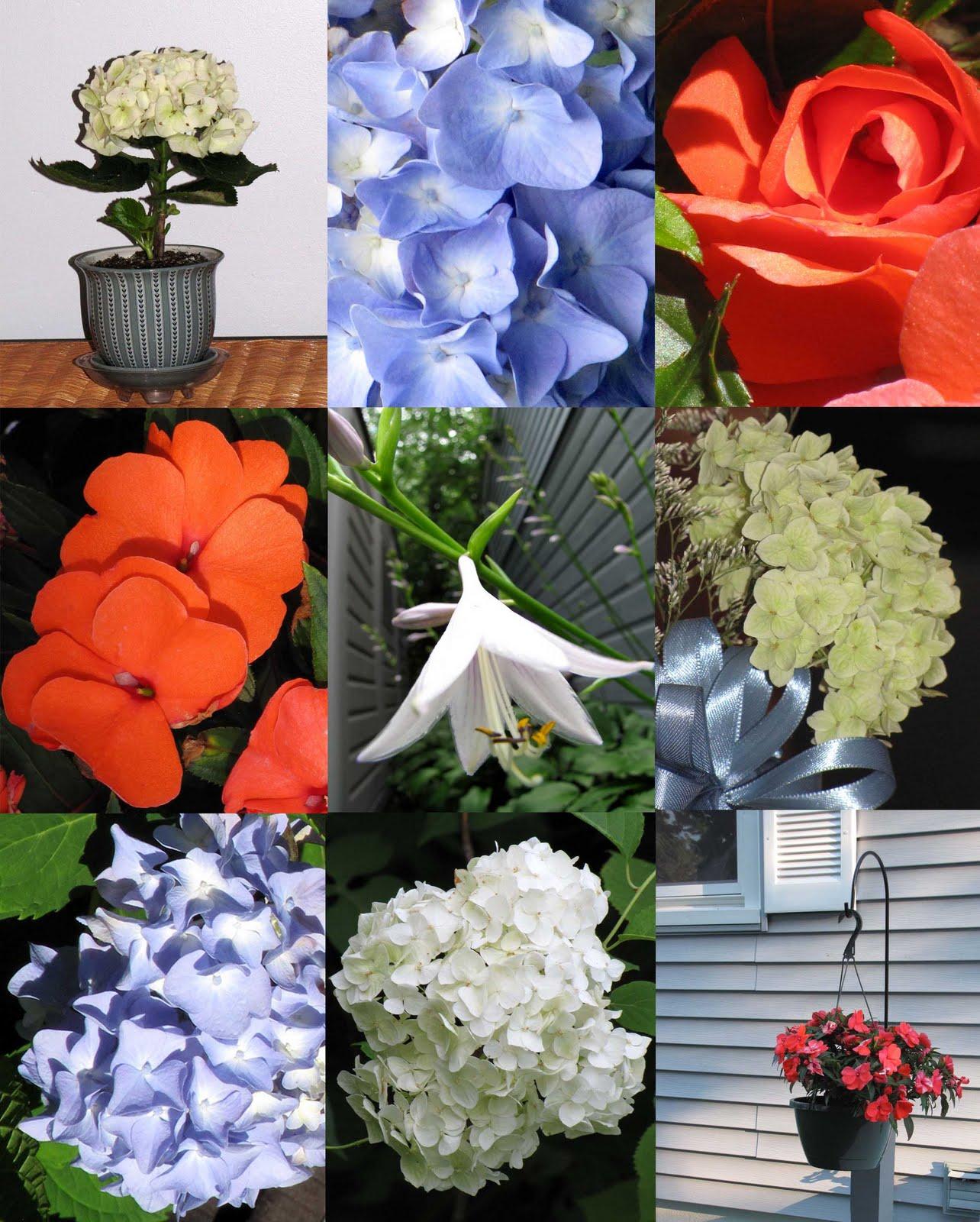 Red white blue flowers desert colors red white blue flowers izmirmasajfo Gallery