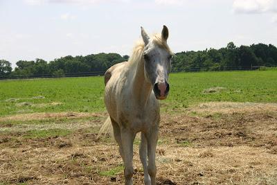 Royal Horse Company Blog: Teacup\'s Arrival at Peace of Heaven Farms!