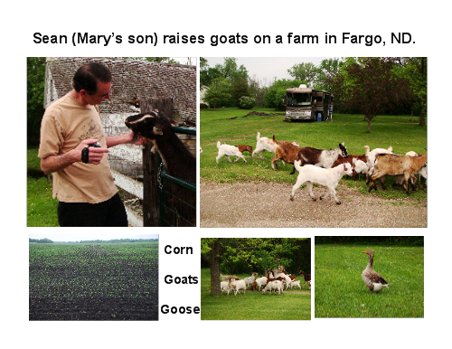 Sean's Goat Farm in Fargo, ND