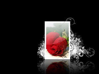beautiful rose wallpaper