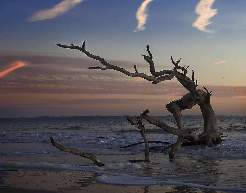 DESIGN SANS FRONTIER Feast your eyes on fiercly designed  : driftwoodonbeach from designsansfrontier.blogspot.com size 800 x 628 jpeg 68kB