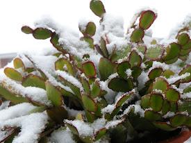 Gran nevada en Jaén II