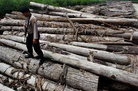 effect of illegal logging Illegal logging is the harvesting of wood that is in violation of national regulations this could include harvesting timber from protected areas, felling protected species, or exceeding logging quotas.