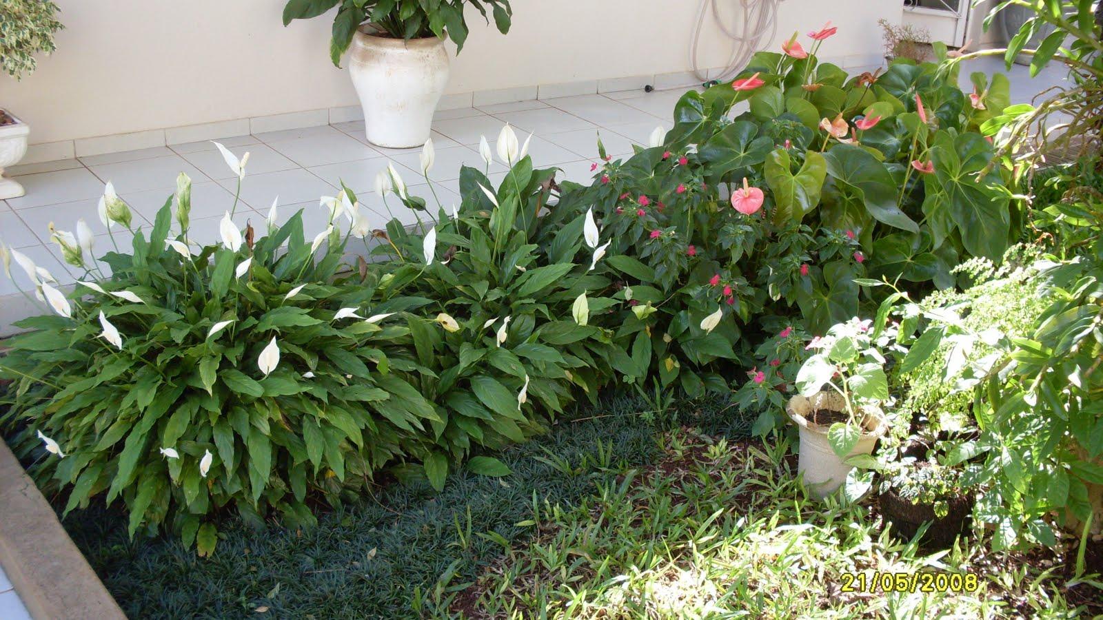 plantas bordaduras jardimAntúrios e Líriosdapaz, com bordadura de