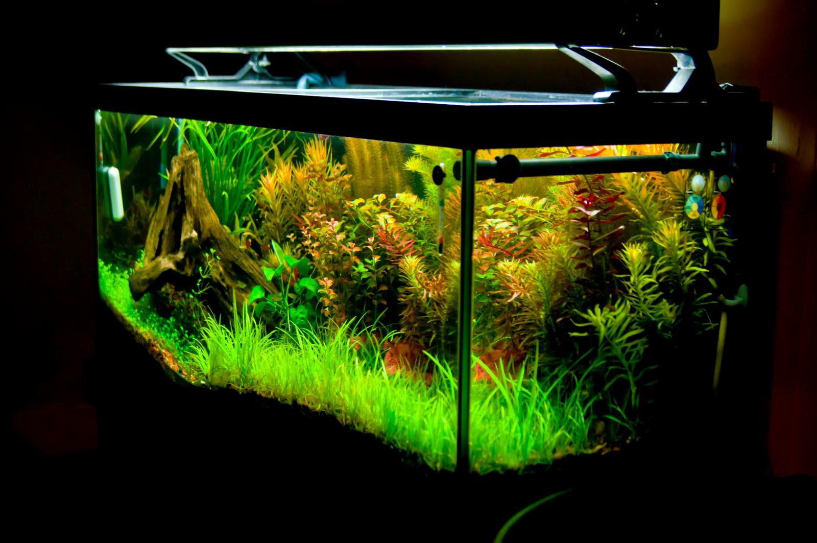 Damian 39 s discus aquarium for Plante aquarium