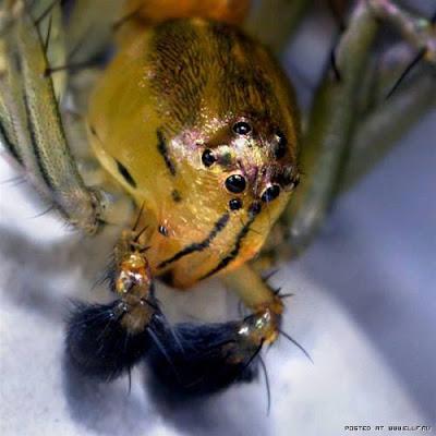 Mata Serangga