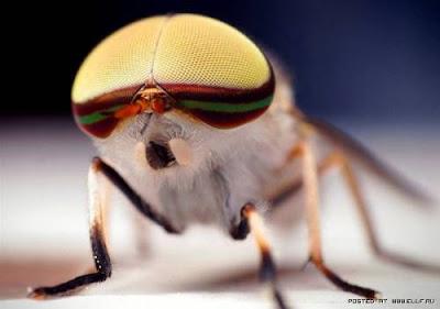 [Image: mata+serangga+%287%29.jpg]