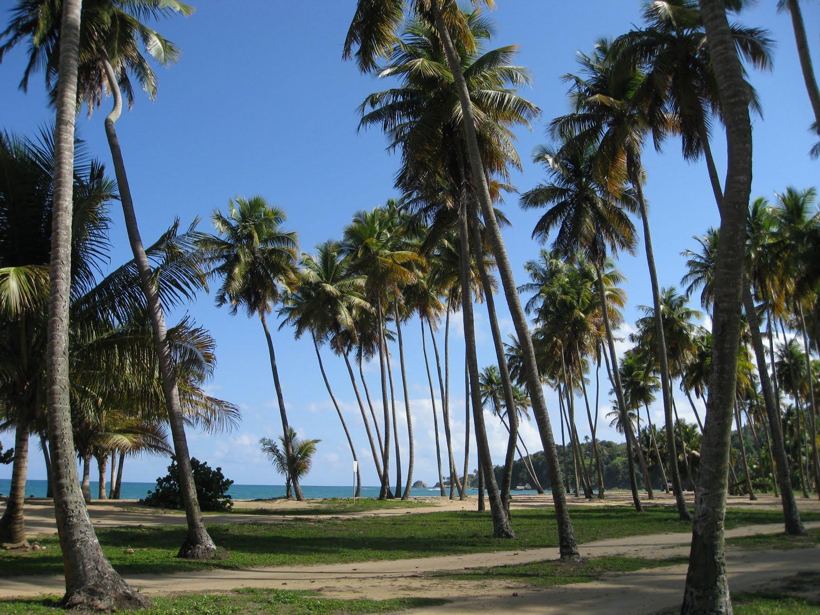 Palm Beach Revolution  Summer Rosters