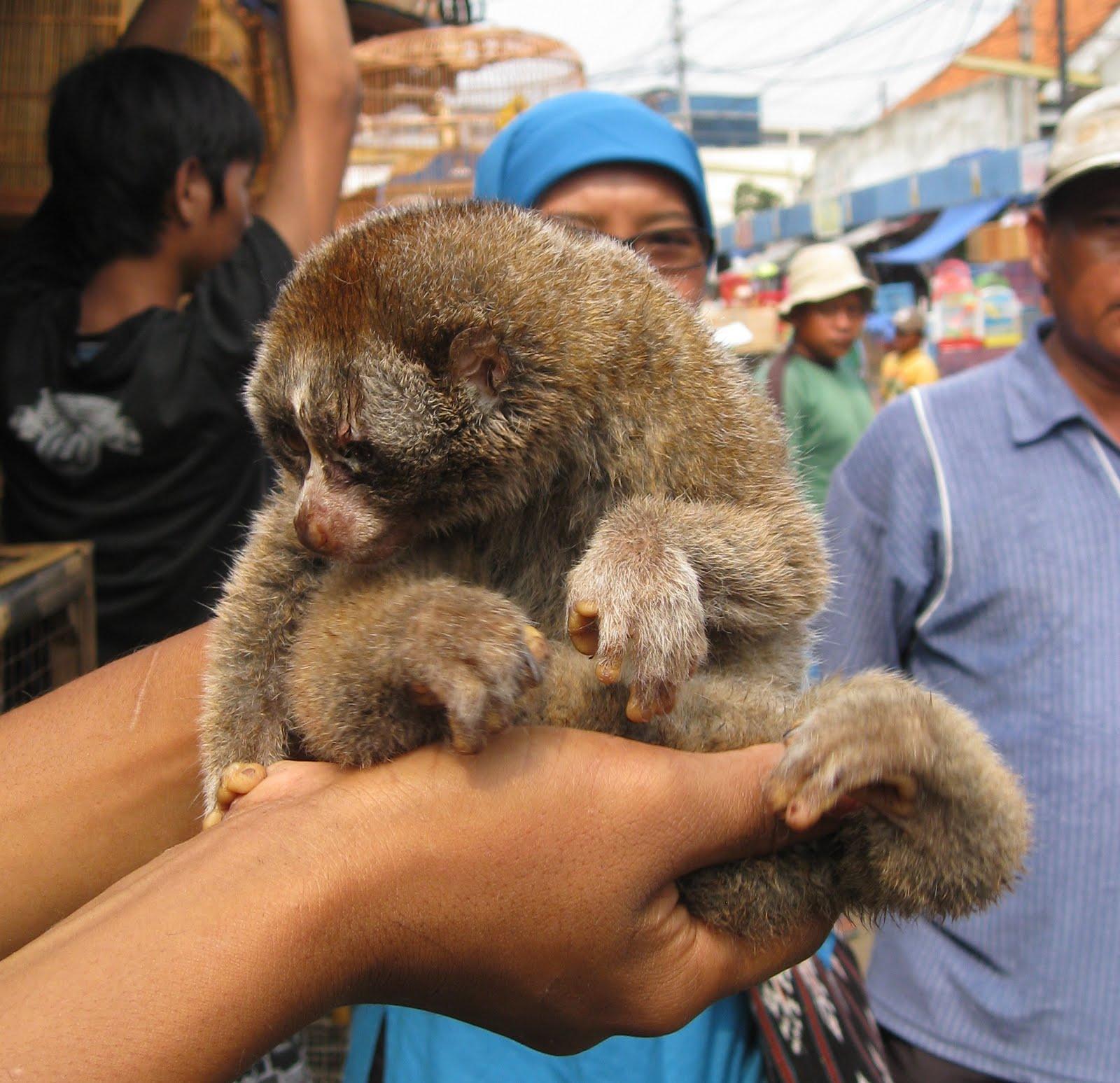 Orangutan With Pet Dog