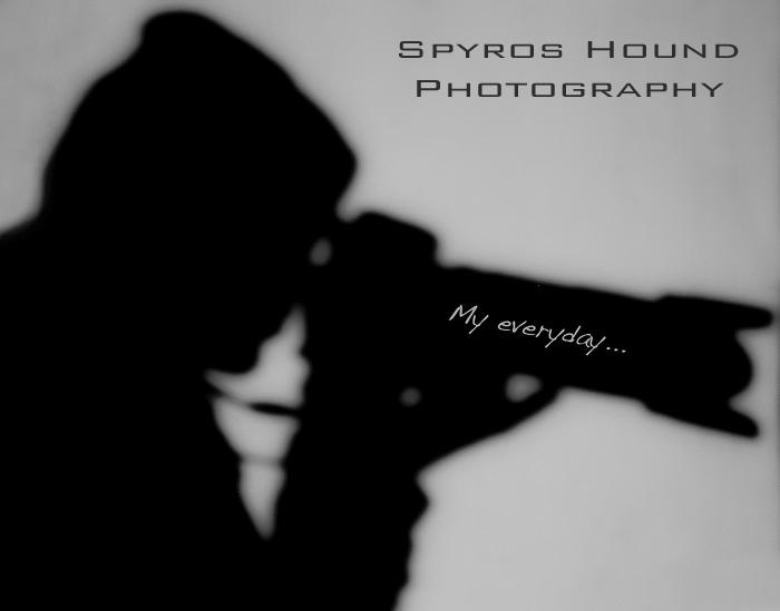 Spyros Hound Photography