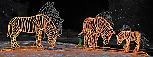 Lighted Zebras