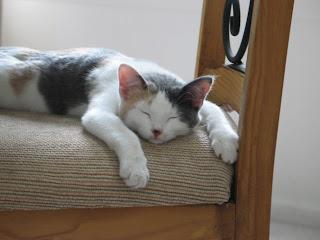Gretel Sleeping Photo2