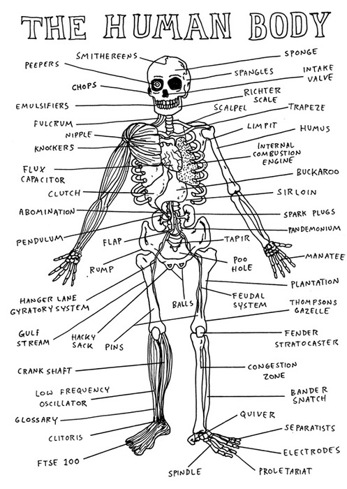 Joints Name Of Human Body Cool Photo Album Website With Joints Name