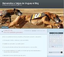 BLOGGER - GALGOS DEL URUGUAY