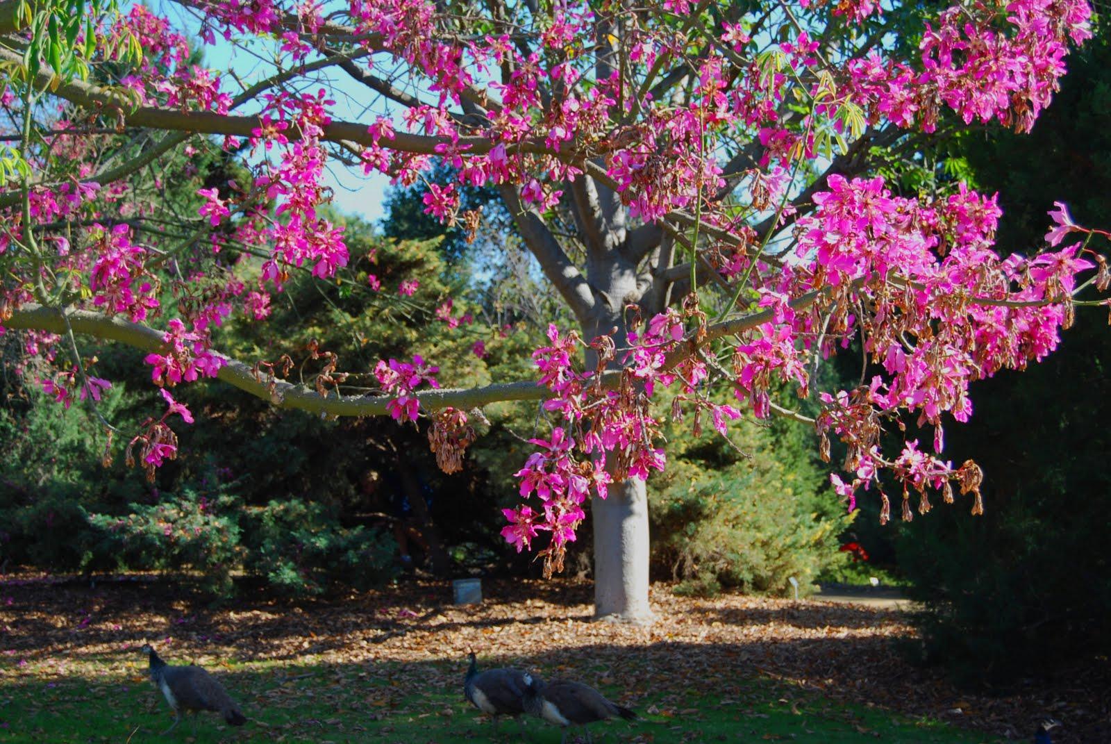 Superieur Secret Cottage Garden